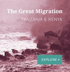 Migration Kenya Tanzania Safaris