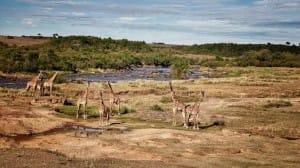 nkorombo-camp