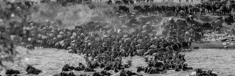 Masai Mara Migration 2016 Photo Safari