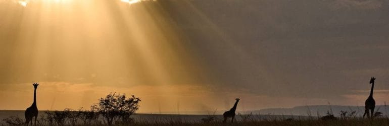 Porini Lion Camp, Masai Mara
