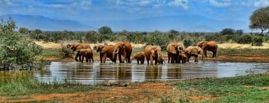 What type of African safari should I choose?