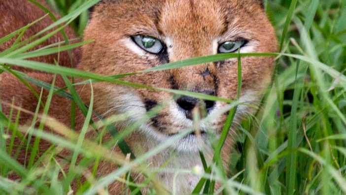 Contact Chalo Africa (caracal)