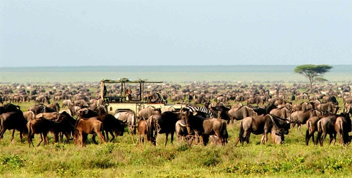 Great Migration Tanzania. Nomad's Serengeti Safari Camp.