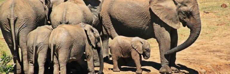 Kruger National Park - Dry Season