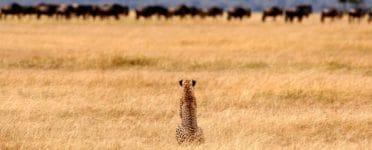 Serengeti Safari Camp Tanzania