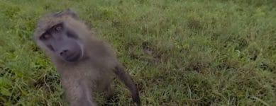virtual safari, 360 degree view