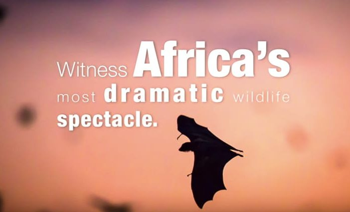 Africa wildlife spectacle
