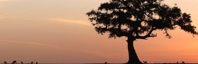 masai mara migration safari kenya