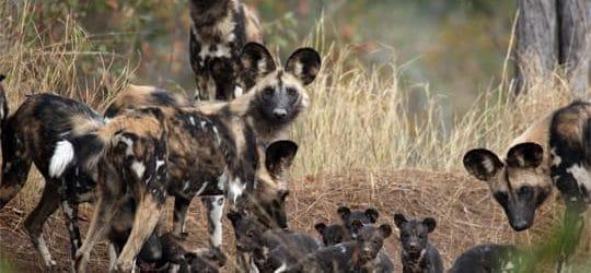 African Wildlife Conservation Fund