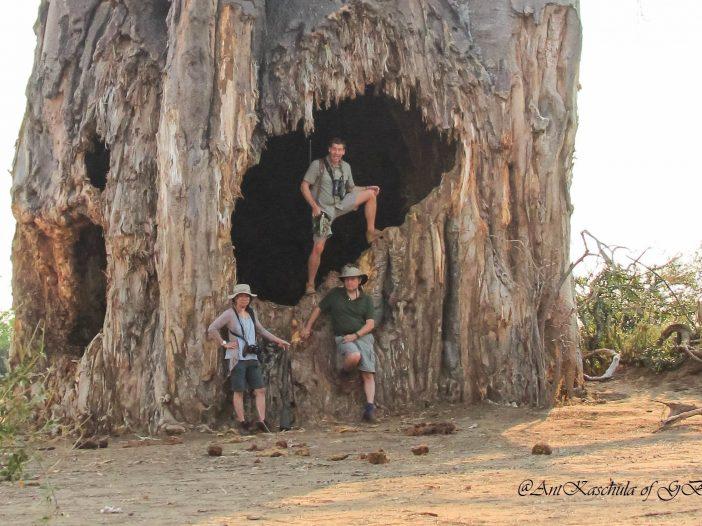 Baobab - Gonarezhou Conservation Trust