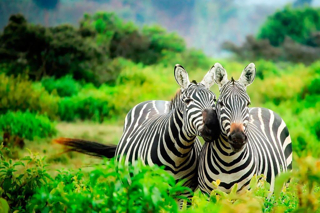Kenya Safari Tours From India Chalo Africa