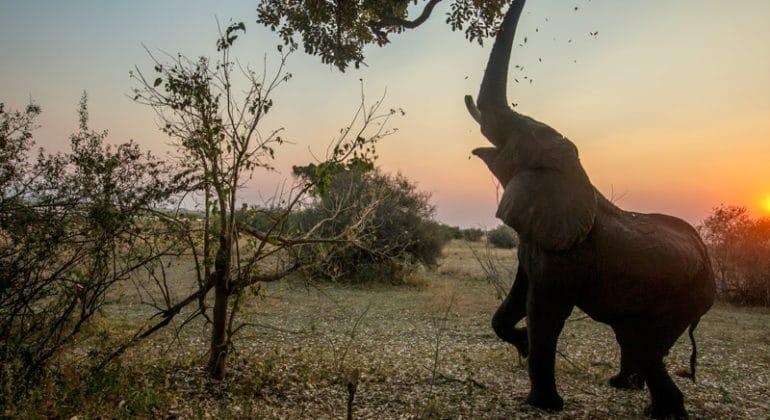Selinda Camp Elephant