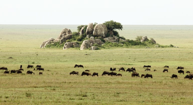 Dunia-Camp-migration-moru-kopjes-serengeti-main