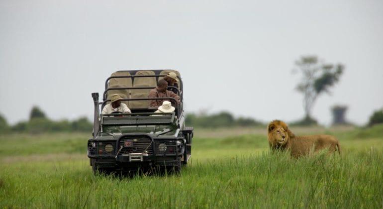 Lion Game Drive Duba