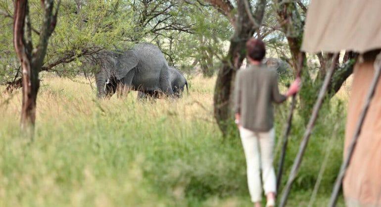 Olakira Camp Elephants From Tent