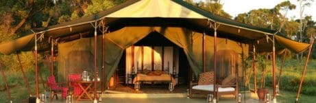 Elephant Pepper Camp Front View