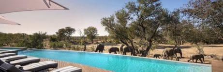 Ngala Safari Lodge Pool