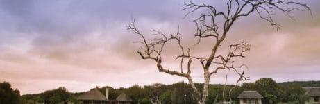Phinda Zuka Lodge View