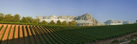 Delaire Graff Estate Vineyards