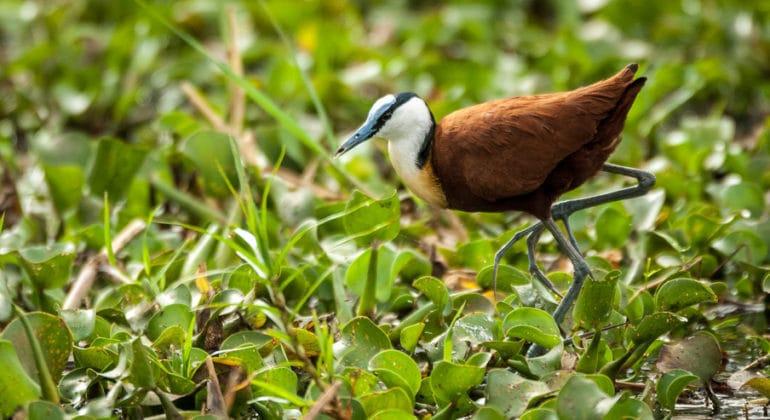 Kuthengo Camp Bird Watching