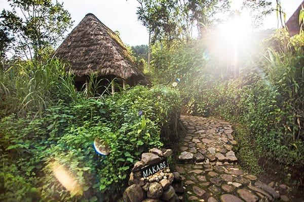 Bwindi Lodge View
