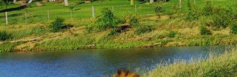 Nkelenga Lodge View