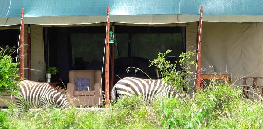 Offbeat Mara Tent