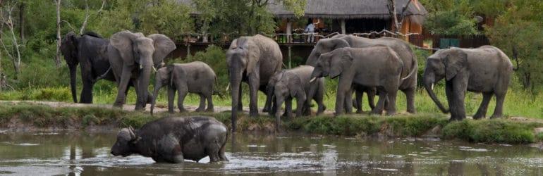 Simbambili Game Lodge Waterhole