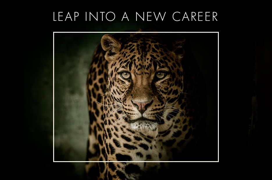 Chalo Africa Careers