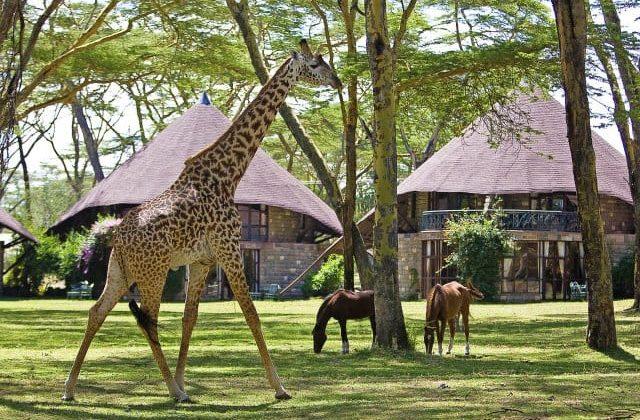 Lake Naivasha Sopa Lodge Wildlife Near Lodge