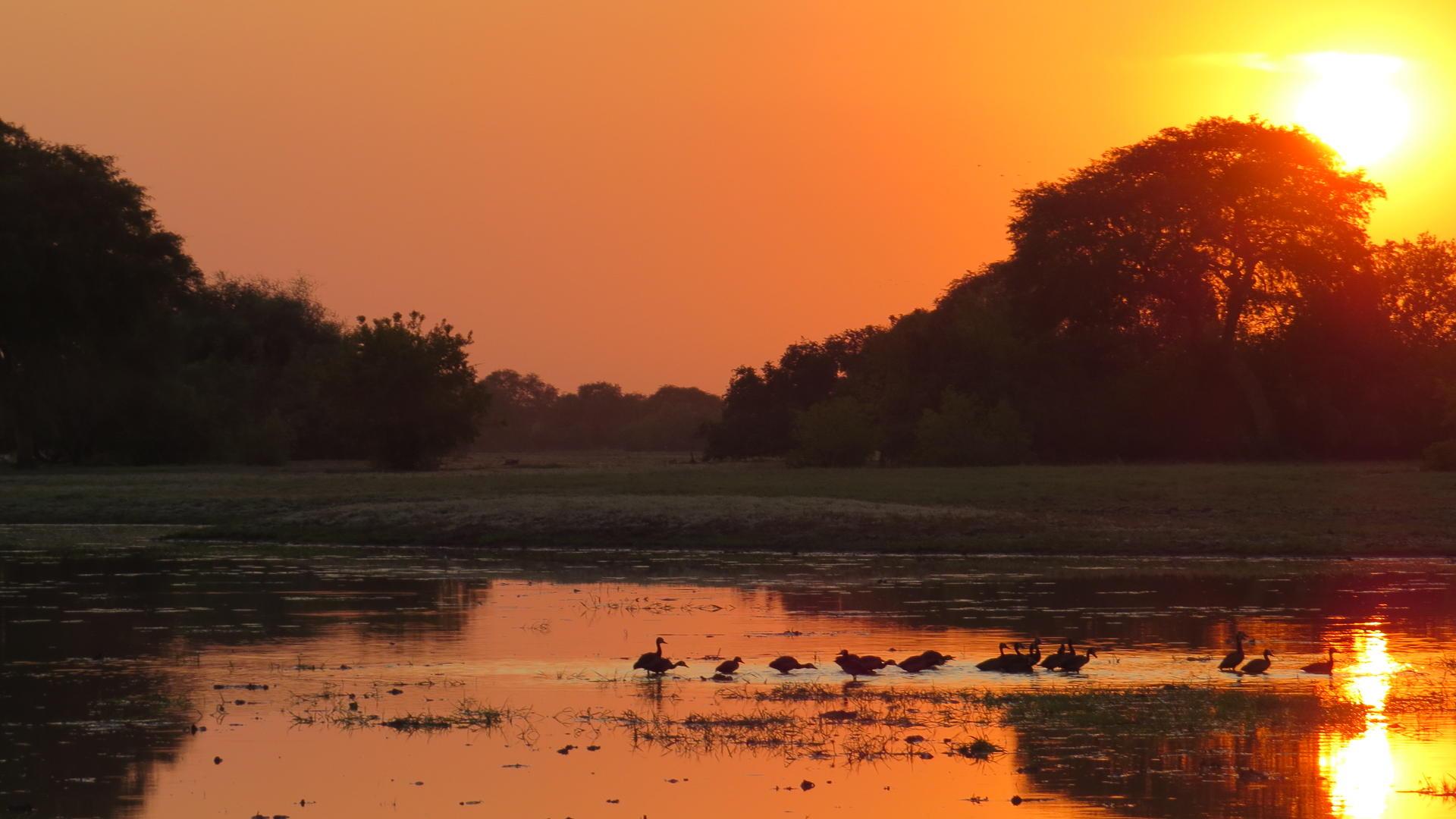 Safari To Zakouma National Park Chad 2019 Chalo Africa