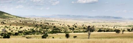 Roving Bushtops View