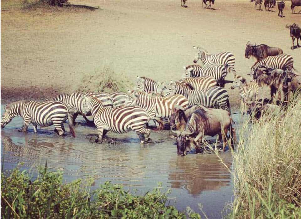 Nomad Tanzania Serengeti Migration