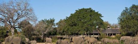 Bush Lodge Elephants