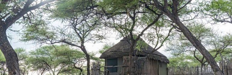 Onguma Tree Top View 1