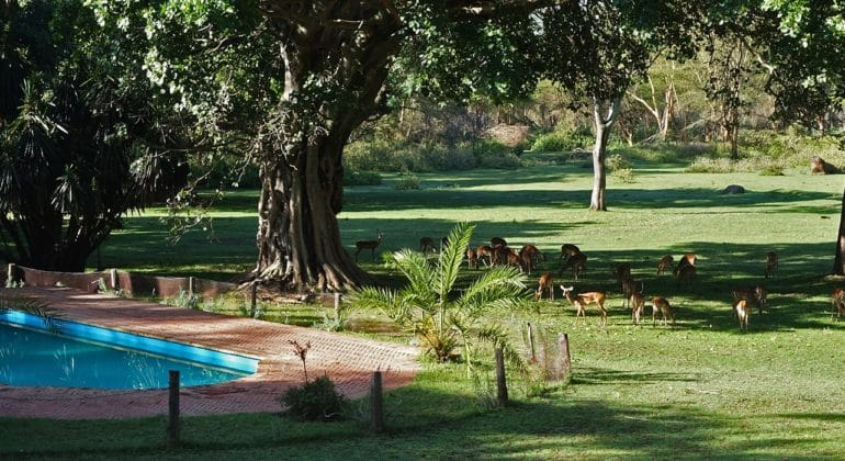 Olerai House Swimming Pool