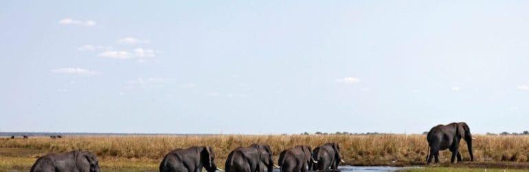 Andbeyond Botswana
