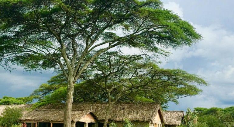 Ndutu Safari Lodge Outdoors