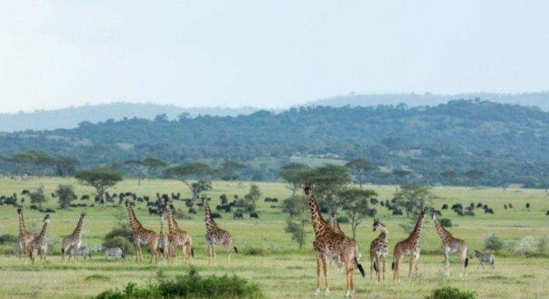 Singita Kwitonda Lodge Wildlife