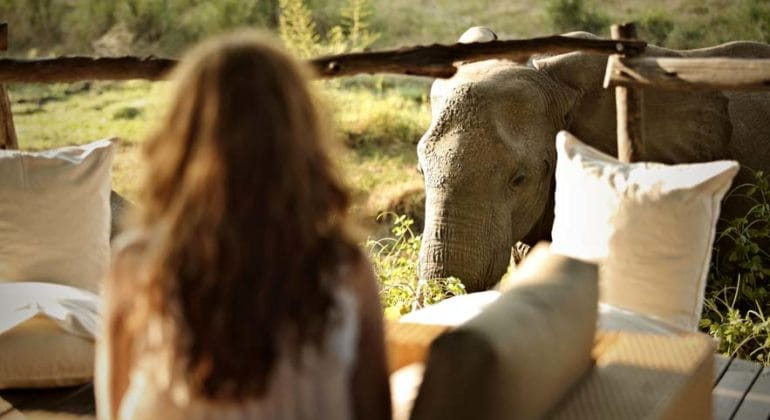 Jackalberry Treehouse Elephant Close Up
