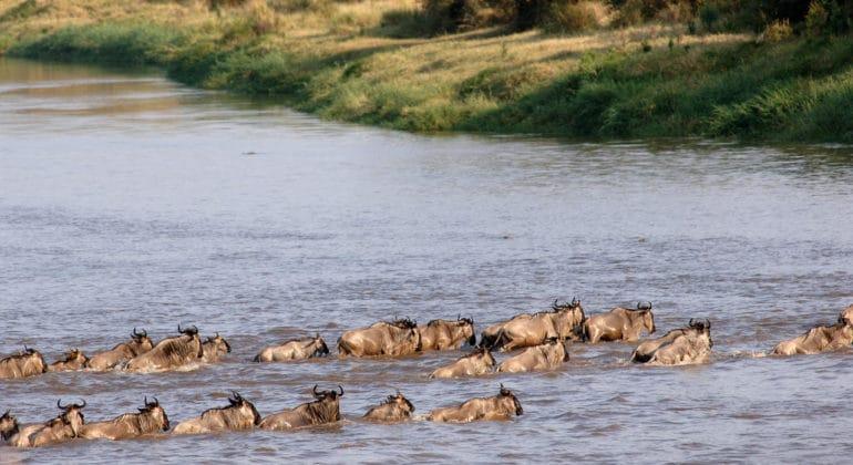 Mara Mara Tented Lodge Hippos