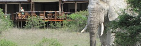 Amakhala Bush Lodge View