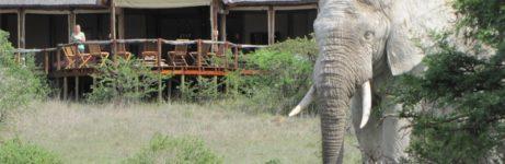 Amakhala Bush Lodge View