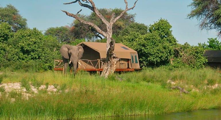 Camp Savuti Tent