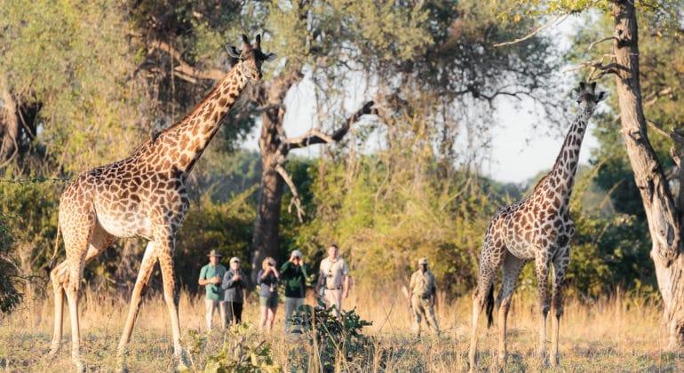 Nkonzi Camp Walking Safari