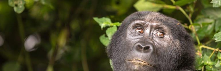 2013 Uganda