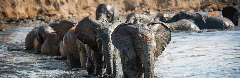 Sheldrick Wildlife Trust Elephants